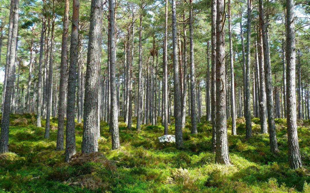 Lo que nos recuerda el Día de la Deuda Ecológica