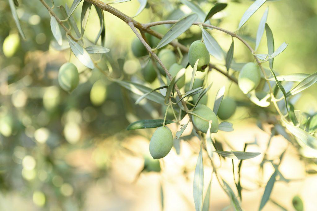 Medio ambiente Andalucía